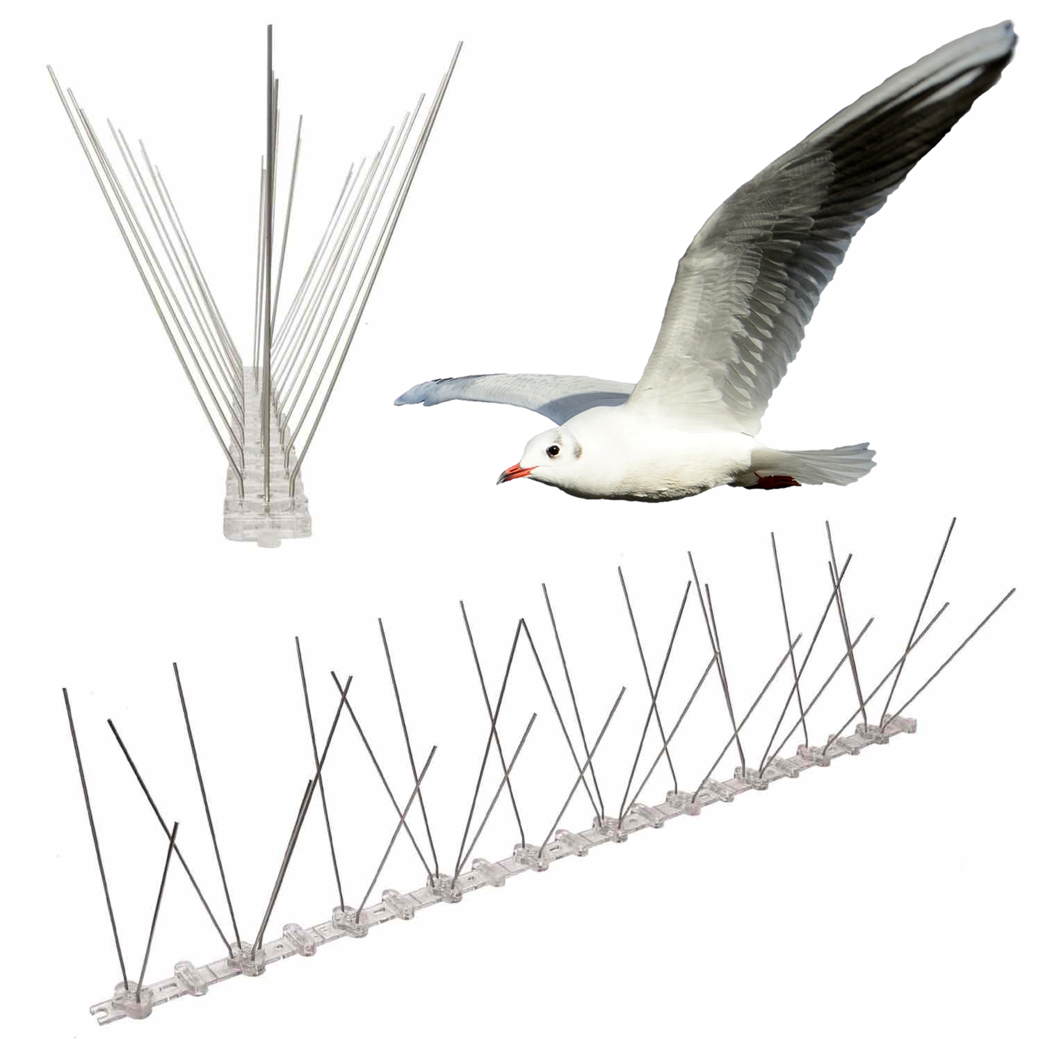 spikes to stop seagulls